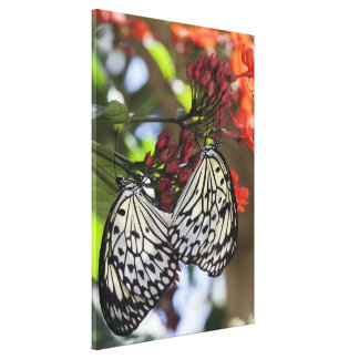 Stretched Canvas Print - Paper Kite Butterfly