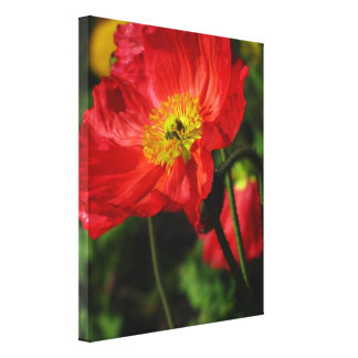 Stretched Canvas Print - Red-Orange Corn Poppy