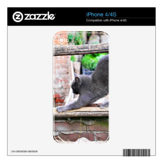 Stretching cat iPhone 4 skins