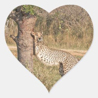 Stretching Cheetah Heart Sticker