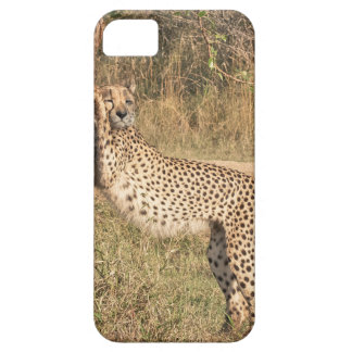 Stretching Cheetah iPhone SE/5/5s Case