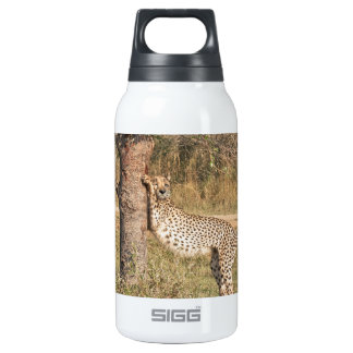Stretching Cheetah Thermos Bottle
