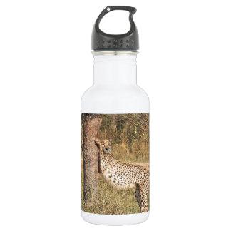 Stretching Cheetah Water Bottle