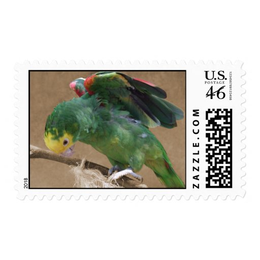 Stretching Double Yellow Headed Amazon Parrot Postage