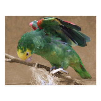 Stretching Double Yellow Headed Amazon Parrot Postcard