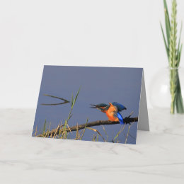 Stretching Kingfisher Card card