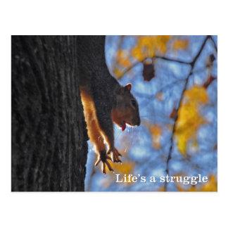 Stretching Squirrel Postcard