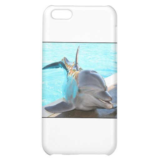 Strike a Pose (Dolphin Photo) Cover For iPhone 5C