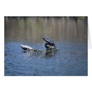 Strike a pose Turtle Card