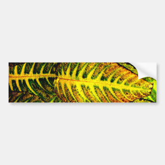 Striking Color Autumn Leaves Bumper Sticker