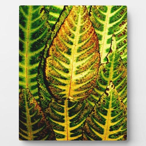 Striking Color Autumn Leaves Photo Plaque