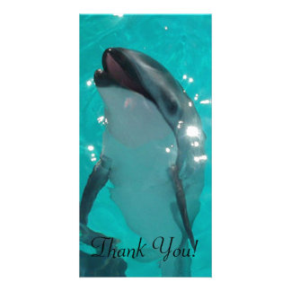 Striking Dolphin in Blue-Green Pool Card