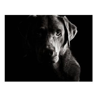 Striking Low Key Labrador Postcard