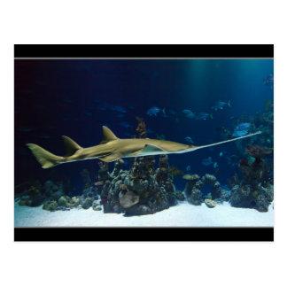 Striking Sawfish Postcard