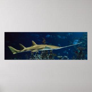 Striking Sawfish Poster