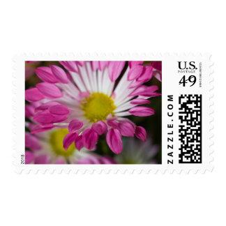 Striking two tone flower postage