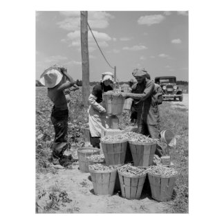 String Bean Pickers in Maryland: 1937 Print
