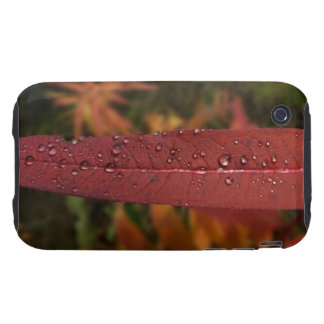 Stripe of Water Beads iPhone 3 Tough Case