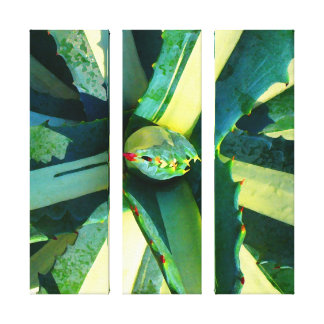 Striped Agave Americana Triptych Stretched Canvas Print