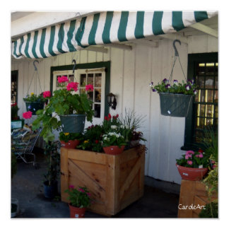 Striped Awning Flowers Poster