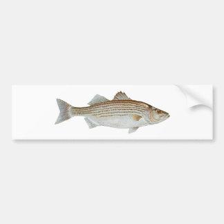 Striped Bass Art Bumper Sticker