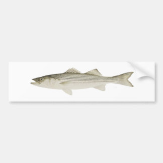 Striped Bass Bumper Sticker