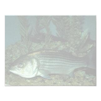 Striped Bass Card