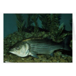 Striped Bass Greeting Cards