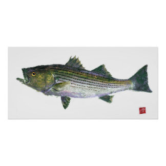 Striped Bass Gyotaku Open Edition Poster