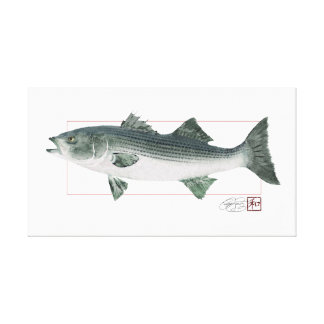 Striped Bass in Digitally Matched Color Canvas Print