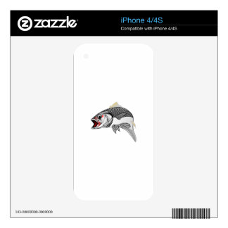 Striped Bass iPhone 4S Decal