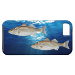 Striped Bass iPhone 5 Cover