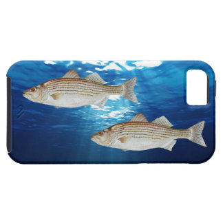 Striped Bass iPhone SE/5/5s Case