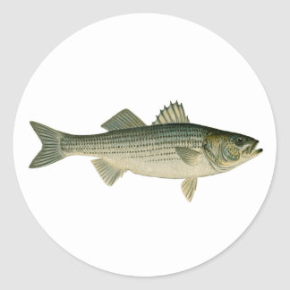 Striped Bass Logo Classic Round Sticker