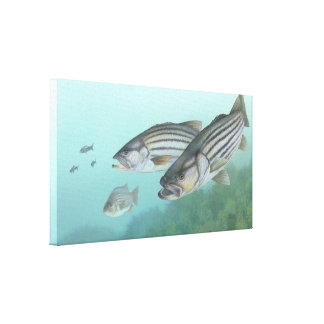 Striped Bass Painting Canvas Print