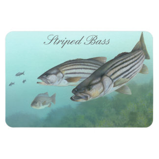 Striped Bass Painting Magnet Rectangular Magnets