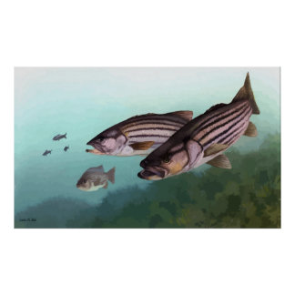 Striped bass signed painting poster