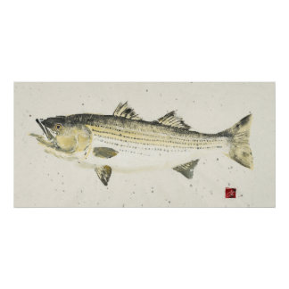 Striped Bass/ Speckled paper Posters