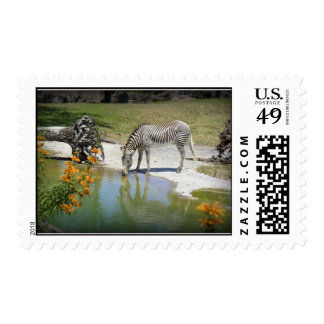 Striped Beauty Postage Stamp