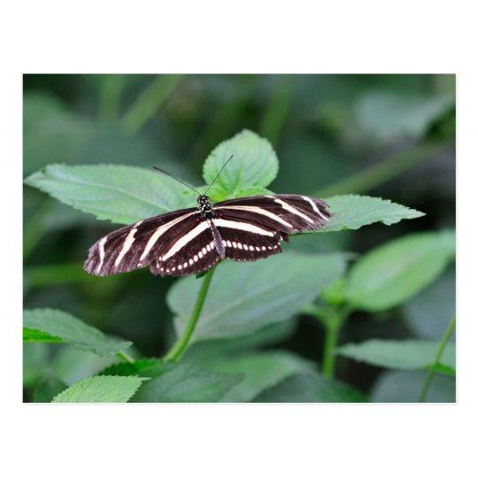 Striped Butterfly Postcard
