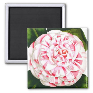 Striped candy cane camellia 2 inch square magnet