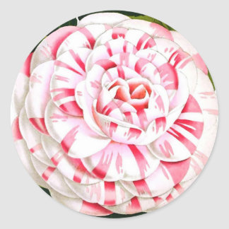 Striped candy cane camellia stickers