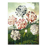 Striped Carnations 5.5x7.5 Paper Invitation Card