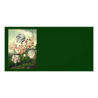 Striped Carnations Card