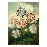 Striped Carnations Greeting Card