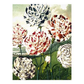 Striped Carnations Letterhead