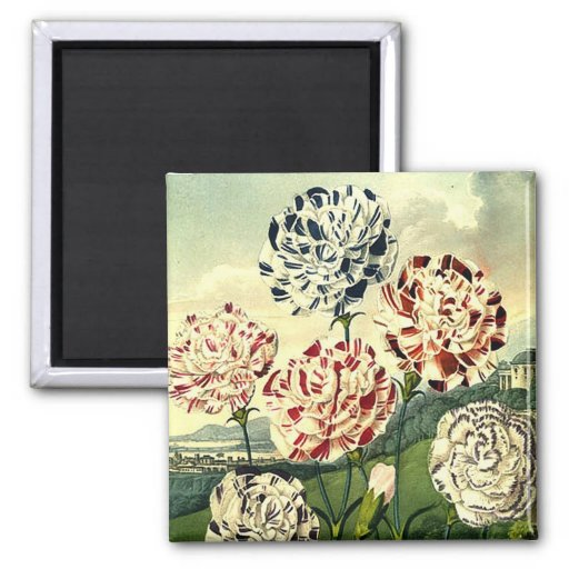 Striped Carnations Magnet