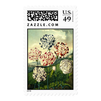 Striped Carnations Postage
