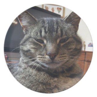 Striped cat melamine plate