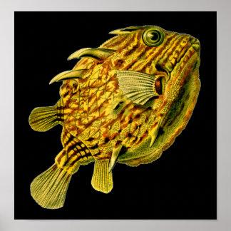 Striped Cowfish Ernst Haeckel Fine Art Poster